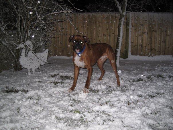 {dog_in_snow}
